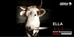 © Animals United Gegenkampagne des Tierschutzvereins Animals United e.V.