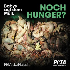 Noch Hunger Bild Peta