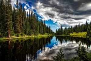 Ein Fluß fließt an einem Tannenwald entlang, während dieser sich im Fluss spiegelt.